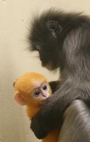 Oranje bij geboorte