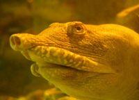 Schildpad plast op een bijzondere manier – via zijn bek