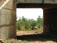 Olifantentunnel