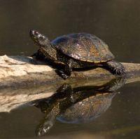 Opvangcentrum voor exotische schildpadden