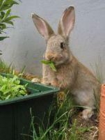 Hout en ruwvoer voor knaagbehoefte konijnen