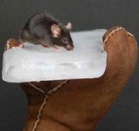 Terugroepactie muizen