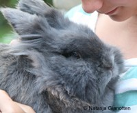 Gein met je konijn (of cavia)