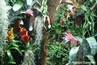 Verrijking door planten