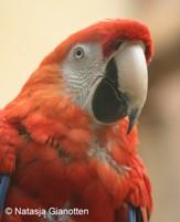 Voeding en welzijn papegaaien