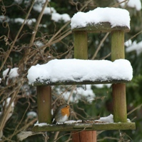 Beleef de Winter