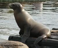 Duurzame haring voor zeeleeuwen