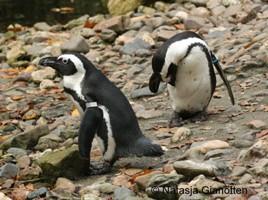 Pinguincreche
