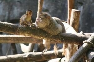 Carnaval in de dierentuin