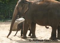 Troostende olifanten