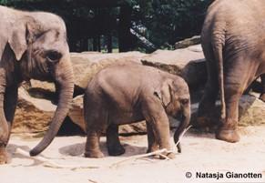 Wel en wee olifantenkudde
