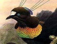 Glinsterende vogelborst
