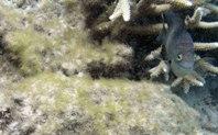 Vissen met een moestuintje