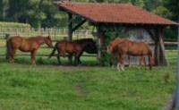 Schuilstallen voor paarden