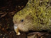 Papegaai uit geplakt ei