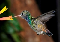 Kleinste vogelsoort
