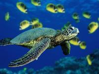Zeeschildpad filmt