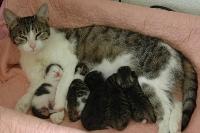 Kittens 16 weken bij hun moeder