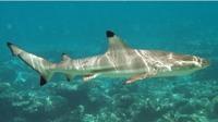 Oude haaien