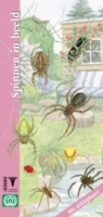 Spinnen in beeld