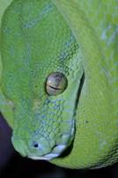 Slangenexpo SERPO