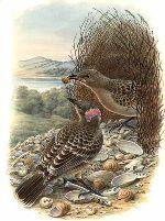Prieelvogels