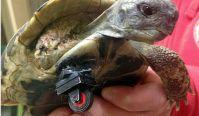 Lego schildpad
