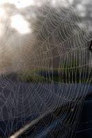 Spin bedrogen