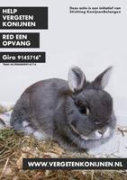 Vergeten konijnen